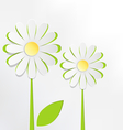 Two cutout chamomiles on grayscale Floral spring vector image vector image