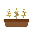 Young green plant seedling growing in a soil flat vector image
