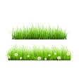 green grass lawn isolated on white floral nature vector image