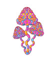 magic psychedelic mushrooms vector image