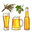 Set of beer bottle mug and glass malt hop vector image vector image