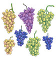 hand drawn grape bunch variety vector image