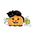 black cat on pumpkin vector image vector image