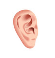 human ear isolated on white photo-realistic vector image