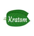 mitragyna speciosa kratom leaf logo vector image vector image