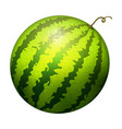 ripe striped watermelon realistic juicy vector image vector image