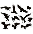 eagles vector image