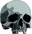 skull handmade drawing vector image