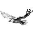 soaring bald eagle drawing sketch a bird vector image vector image