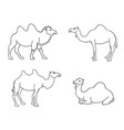 camels in contours vector image