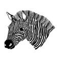 animal zebra black and white head black color vector image