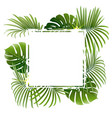 banner with tropical plants and palm branches vector image vector image