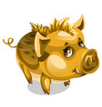 cute little golden boar animal isolated vector image vector image