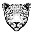 Graphical leopard head vector image