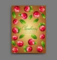 with realistic cranberries isolated vector image vector image