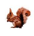 eurasian red squirrel from a splash watercolor vector image