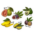 fig and guava avocado and mangomaracuya sketches vector image