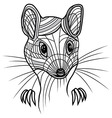 Rat or mouse head animal for t vector image vector image