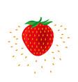 strawberry fruit icon vector image