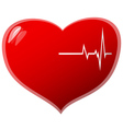 Beating heart vector image