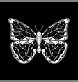 butterfly white drawing on black background vector image