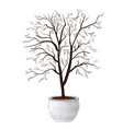 compact domestic tree in ornamental flowerpot vector image vector image