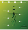 Tree And Root Infographic Design Template vector image