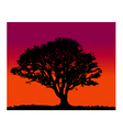 tree silhoutte sunrise vector image vector image