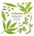cardamom elements set vector image vector image