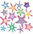 color starfishes collection isolated silhouette vector image
