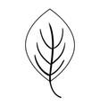 line plant tropical leaf nature design vector image vector image