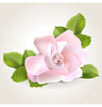 Rose corner vector image vector image