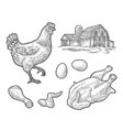 set chicken whole hat leg wing egg and farm vector image