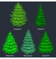 Set of christmas tree like fir or pine Blue vector image vector image