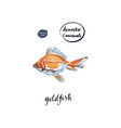 watercolor orange goldfish vector image vector image