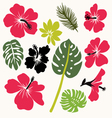 Set of tropical leaves and flowers vector image vector image