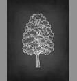 chalk sketch maple tree vector image vector image