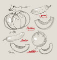 hand drawing juicy melons vector image vector image