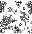 seamless pattern with black and white juniper vector image vector image