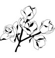 silhouette blossoming magnolia black on white vector image vector image