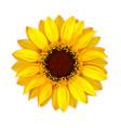 Sunflower blooming botanical nature flower