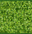 green leaves pattern texture template background vector image