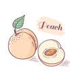 Peach with slice vector image