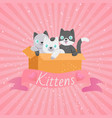 cute cartoon cats funny playful kittens pet kitty vector image