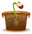 Growing plant in clay pot vector image vector image