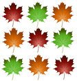 maple leaves1 vector image