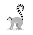 african animal cute lemur with striped long tail vector image vector image