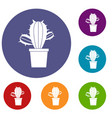 cactus houseplants in pot icons set vector image vector image