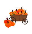 pumpkins in a wooden cart flat style vector image
