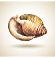 Watercolor Shell vector image vector image